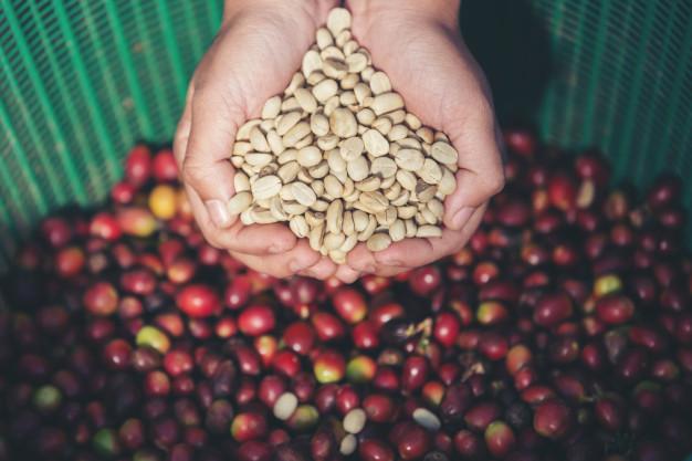 onde-comprar-cafe-verde